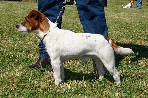 Pinjarra-Henry---best-dog-in-show