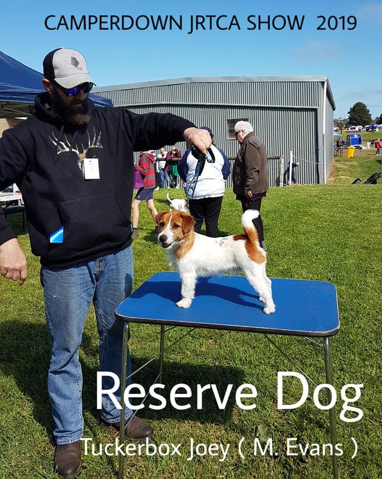 Reserve Dog